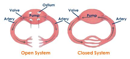 bio example of closed system