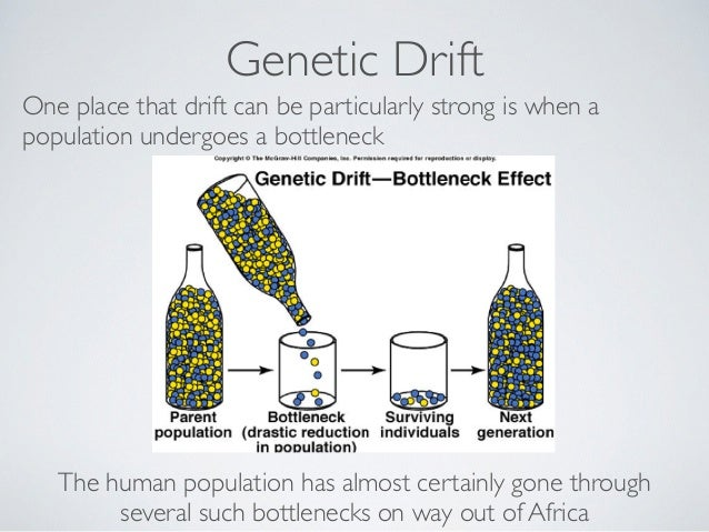 genetic drift example real-life