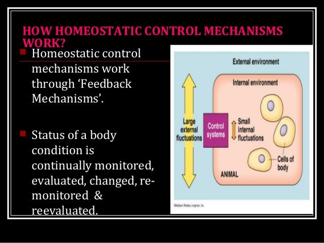 a specific example of homeostasis