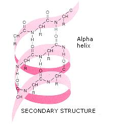 beta pleated sheet polypeptide chain example
