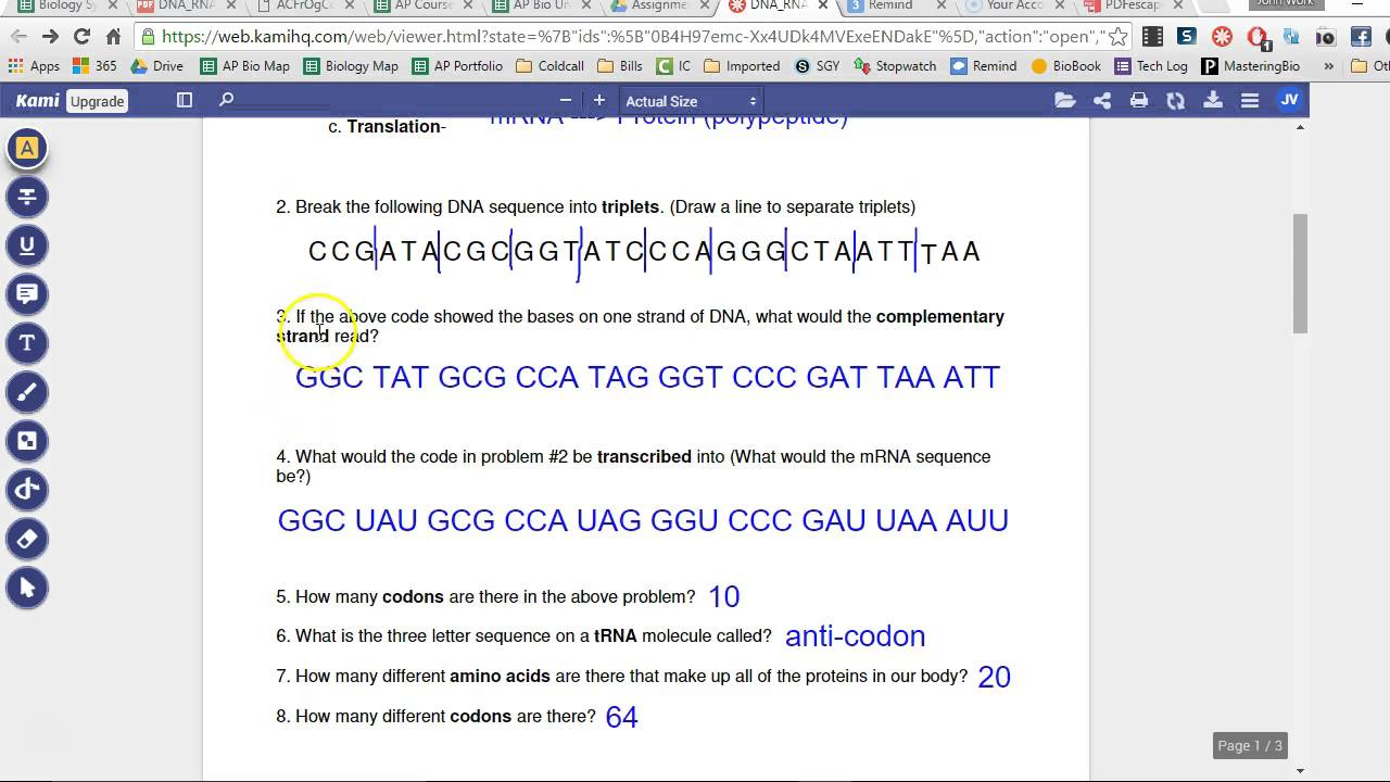 dna to rna to protein example