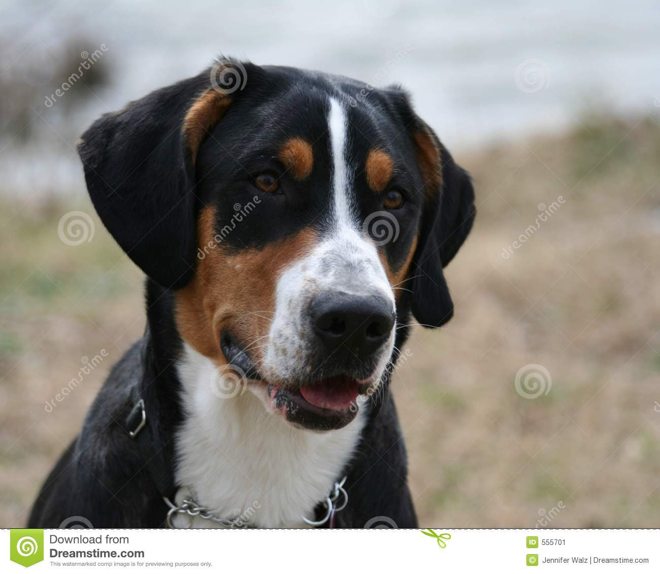 detailed dog breeding business plan template example