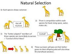 describe and give an example of genetic drift