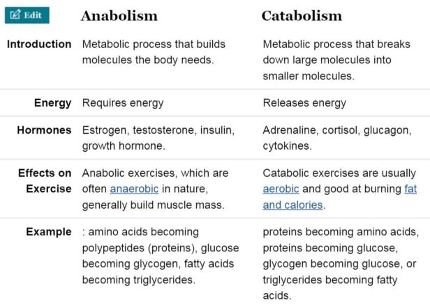 what is an example of basal metabolism activity