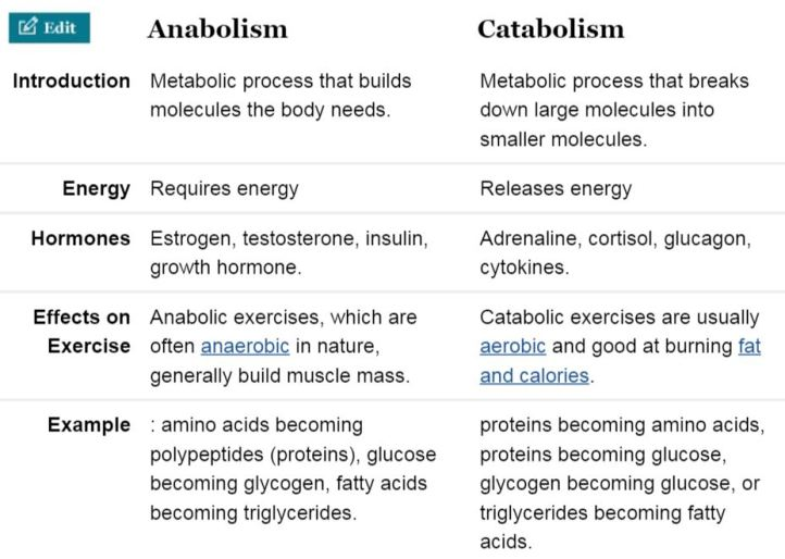 what is an anabolic reaction example